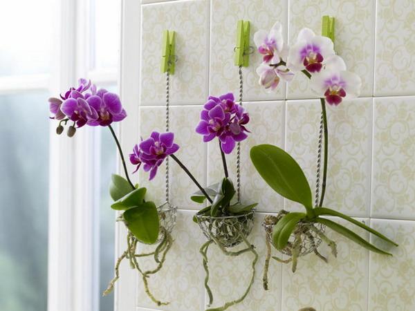 Горшок орхидеи своими руками фото