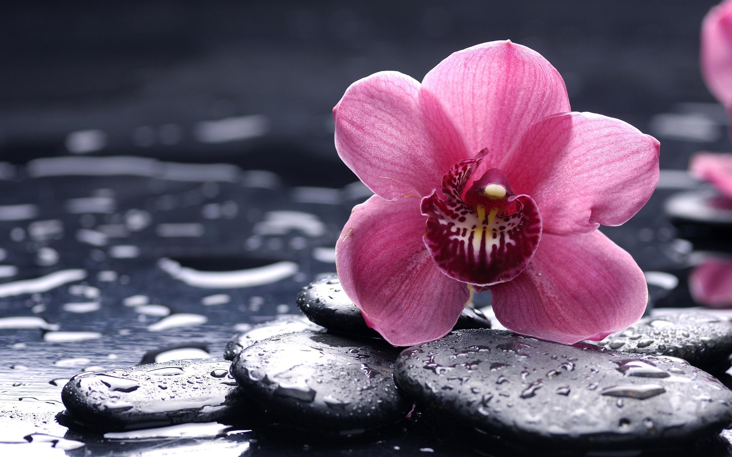 Розы своими руками из цветной бумаги